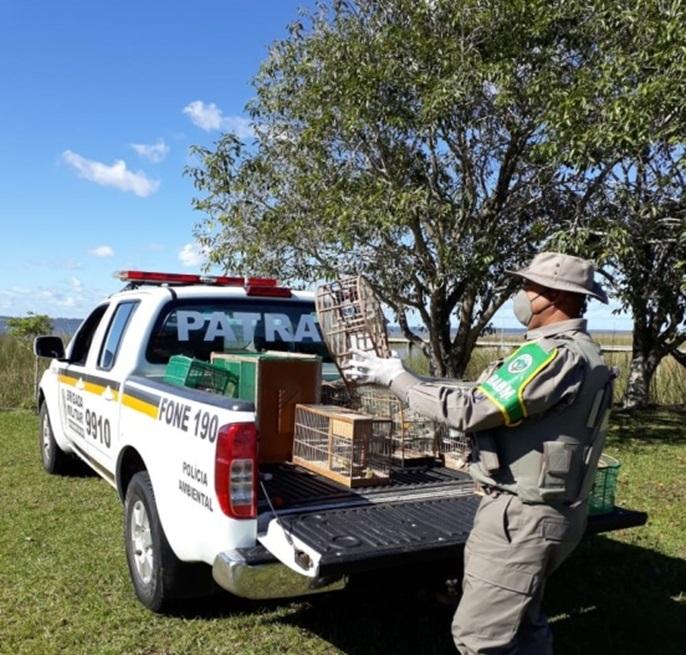 Comando Ambiental realiza soltura de aves silvestres