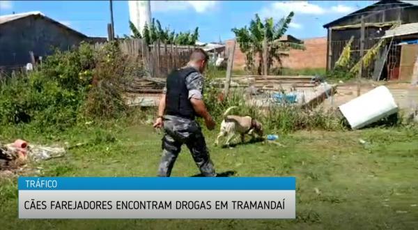 Cães farejadores encontram drogas em Tramandaí